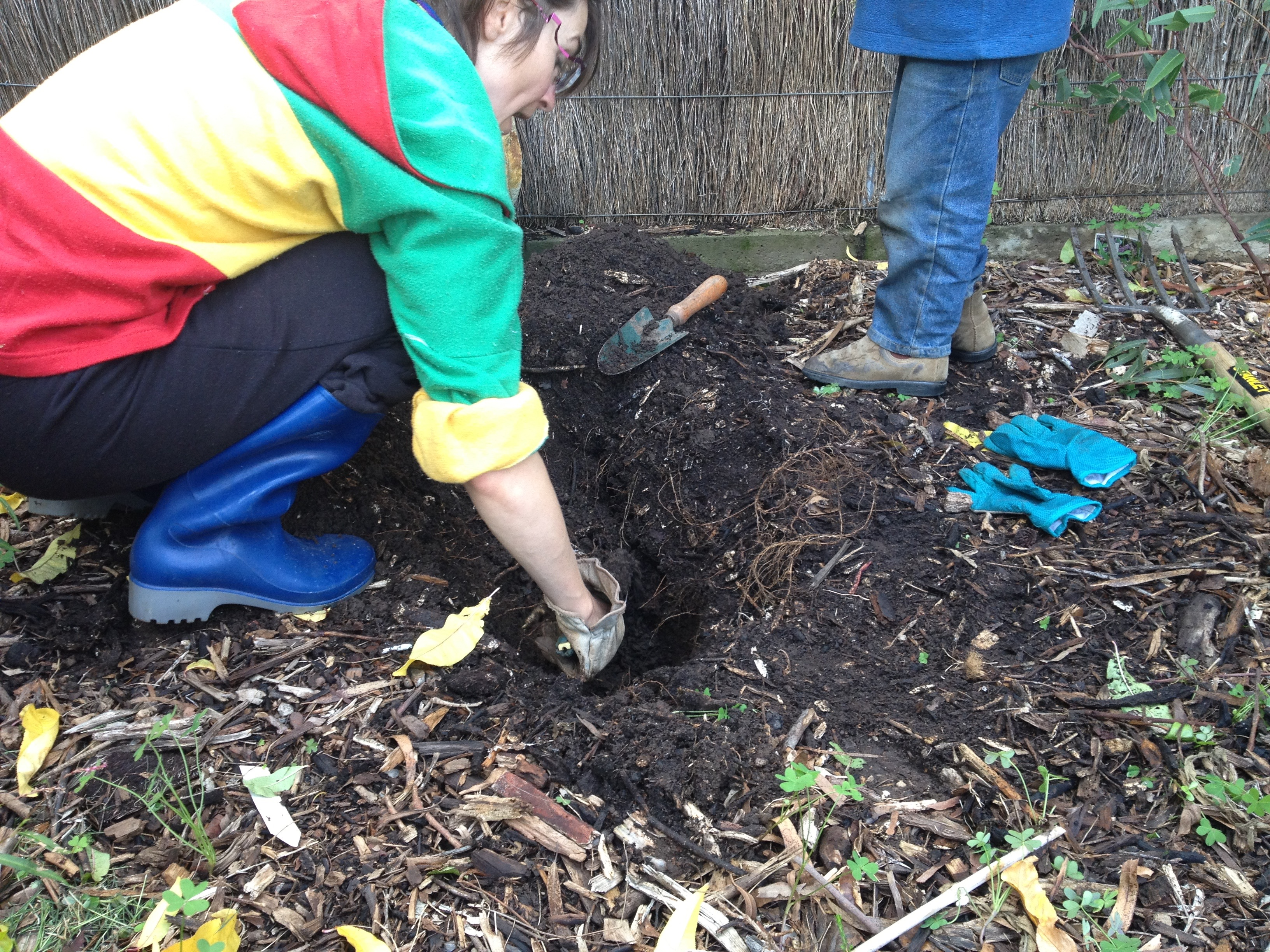 digging a shallow hole