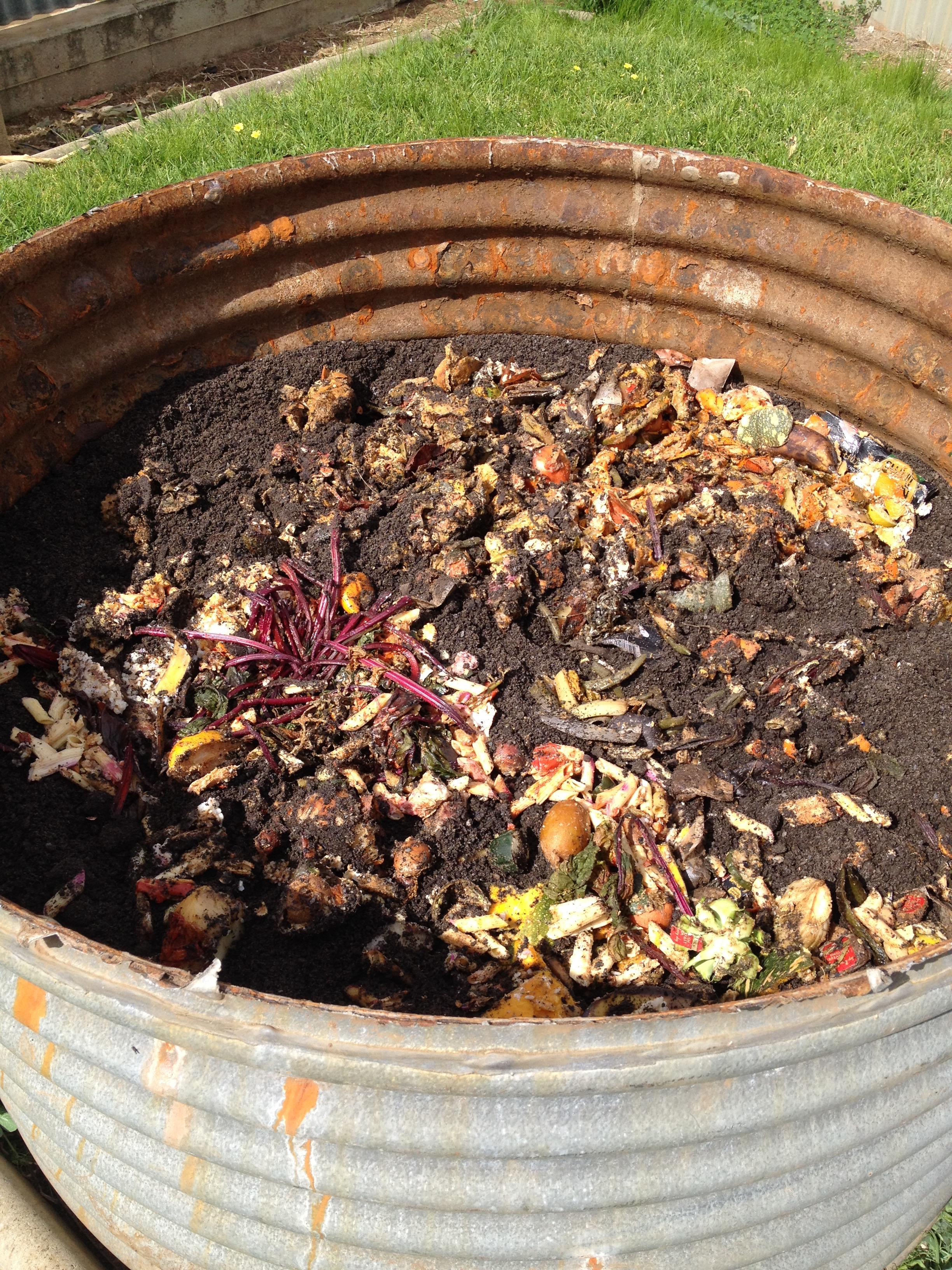 spread a layer of bokashi on your vegie garden bed